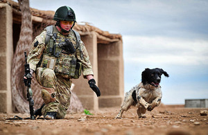 Military working dog Theo being put through his paces by handler Lance Corporal Liam Tasker at Camp Bastion, Helmand province, southern Afghanistan