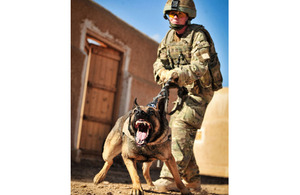 Private Lian Kirton training in Camp Bastion with her military working dog Vigo