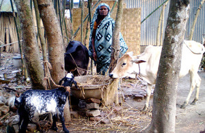 Amina poses with her livestock.
