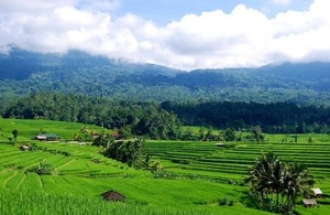 Rice fields in Bali, Indonesia. Picture: Daniel Murdiyarso/CIFOR.