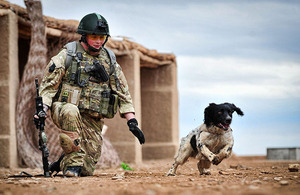 Military working dog Theo is put through his paces by handler Lance Corporal Liam Tasker at Camp Bastion, Helmand province, southern Afghanistan