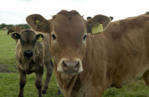 Any farm with an overdue bovine TB test will face a reduction of CAP payments