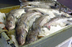 Box of haddock