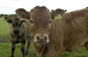 Cuts to red tape to save farmers and taxpayers £70m