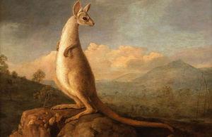 George Stubbs' Kangarou
