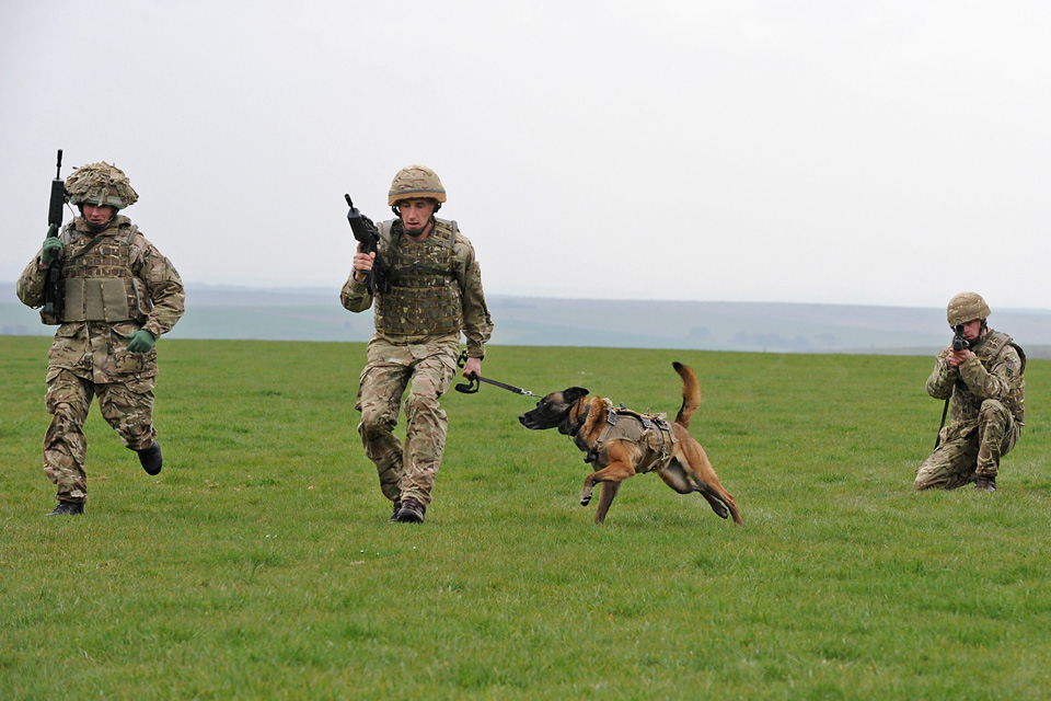 Military working dogs demonstration