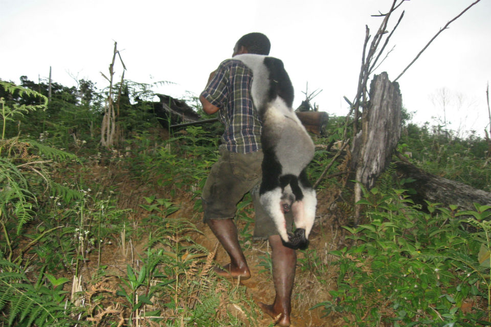 Man carrying a dead lemur on his back
