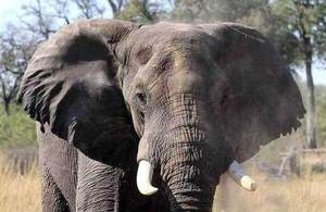 Illegal Wildlife Trade Challenge Fund open for bids