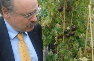 Sir Mark Walport examining a crop of purple tomatoes