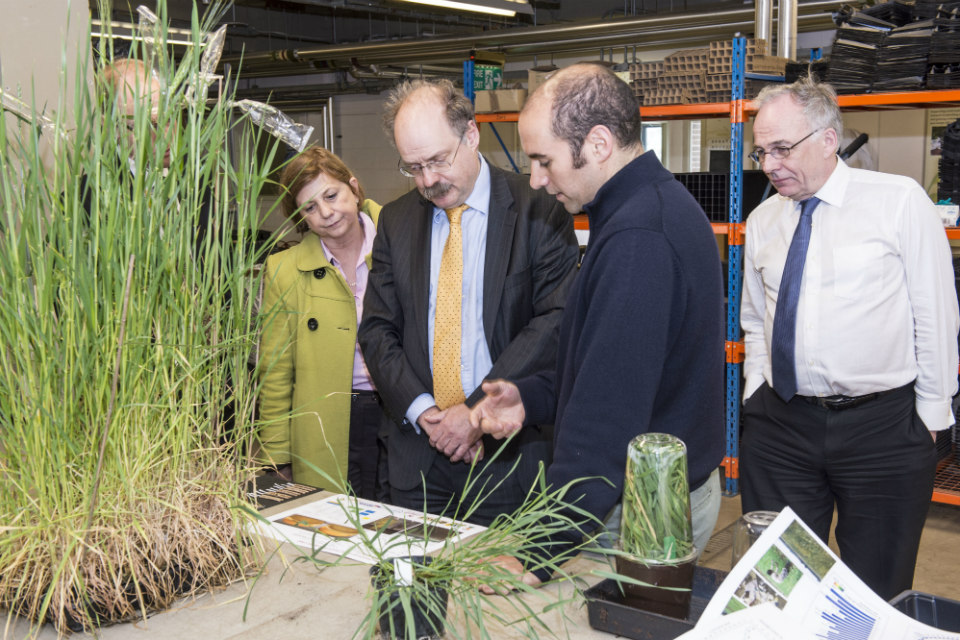 Sir Mark Walport examining disease-resistant wheat