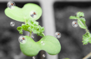 White mustard plant with an artist's impression of molecules superimposed [Picture: Crown copyright]