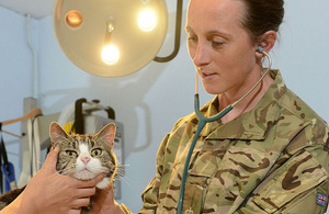 Army reservist and PDSA vet Angela Heeley checks over one of her feline patients [Picture: Corporal Barry Lloyd, Crown copyright]