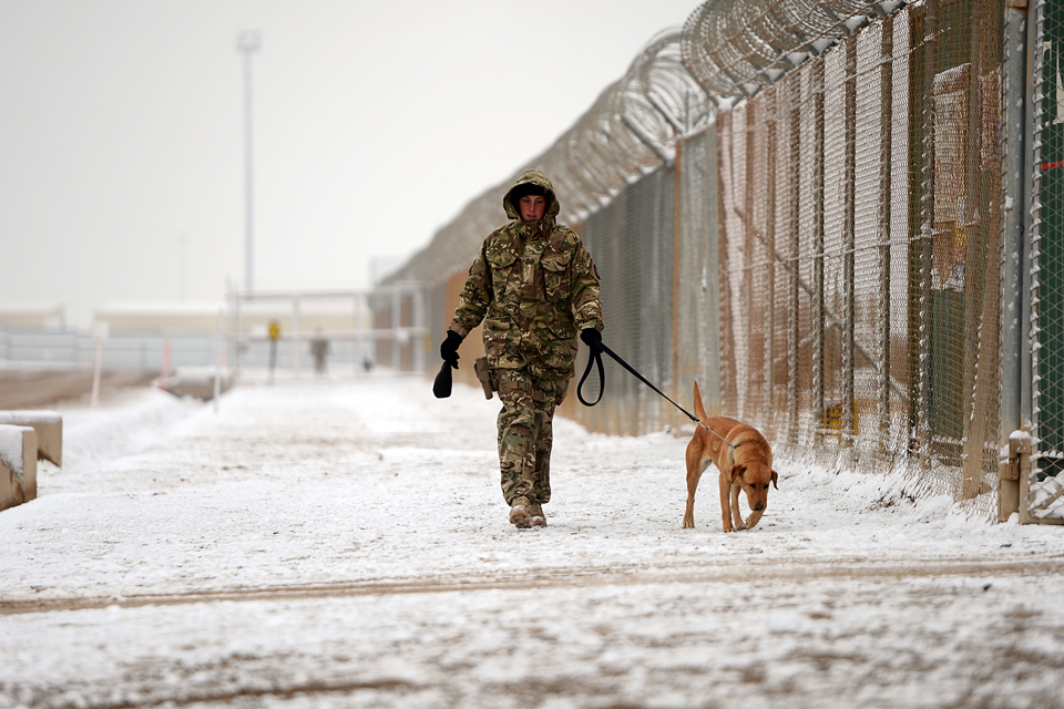 A handler walks her dog along a snow-covered road