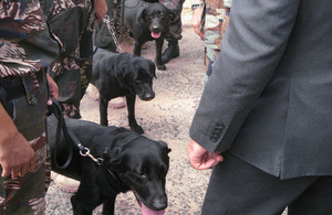 UK trained military dogs