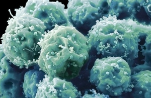 Stem cells under the microscope