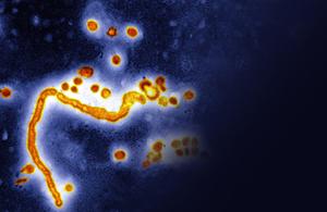 Flu organism