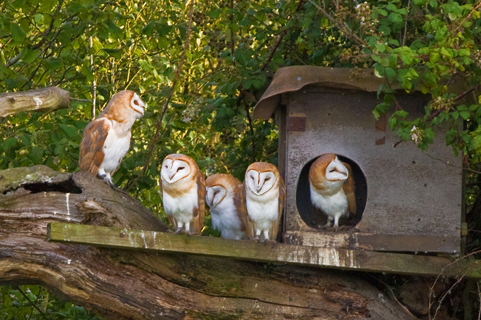The Owl and Raptor Nest Box Project