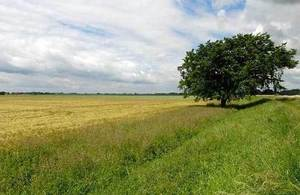 field, countryside and tree