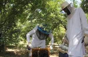 Helmand farmers' bee farms
