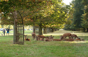 An historic parkland with vistors walking through a landscape shaded by veteran trees and close to a herd of red deer