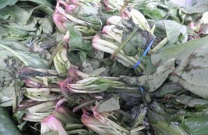 Rotten spinach found during HMI investigation
