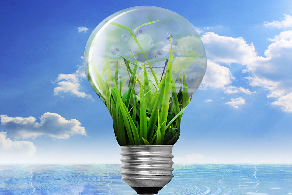 A lightbulb with green shoots growing inside it