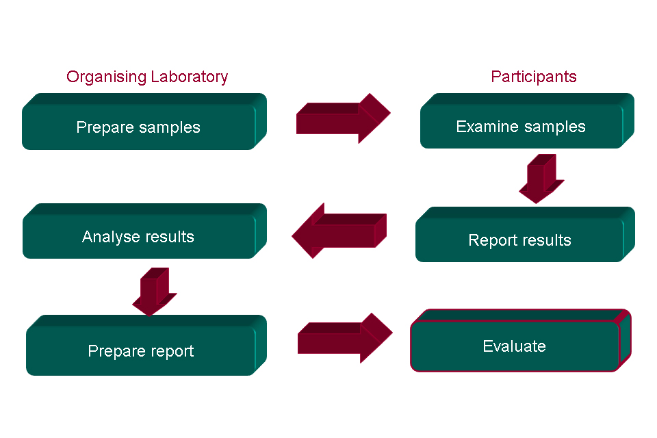 Diagram showing the proficiency testing (PT) process