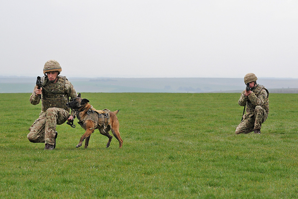 Military Working Dog in action [Picture: Richard Watt, Crown copyright]