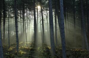 c. Natural England