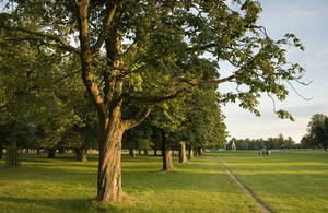 The famous Chestnut Avenue at Bush Park in London which is now a site of scientific interest