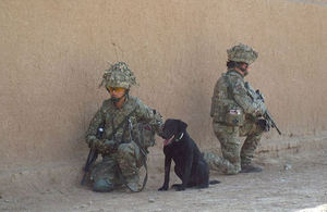Military Working Dog and handler from 1st Military Working Dog Regiment