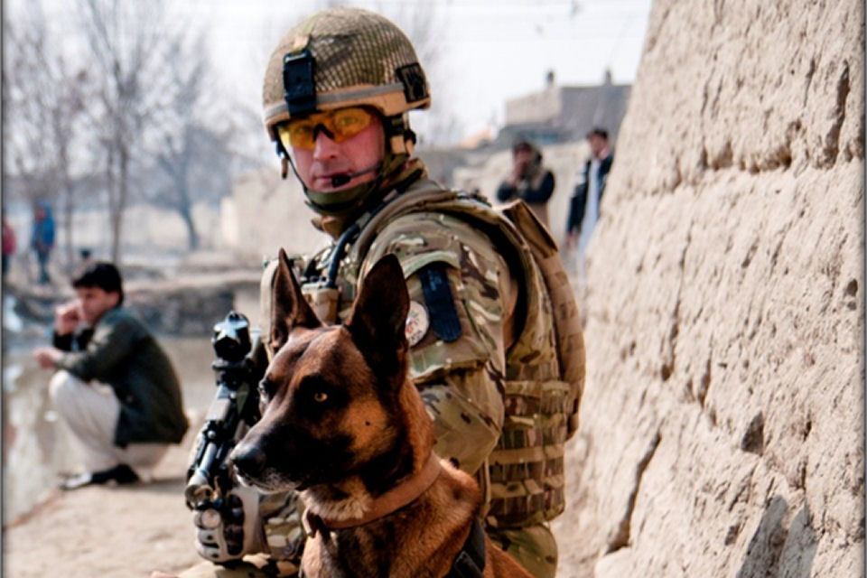 Do Marines Get To Keep The Dogs