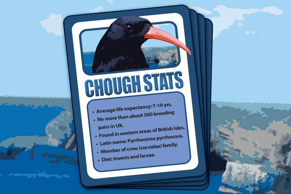 Some key facts about the Chough. [Crown Copyright MOD 2015]