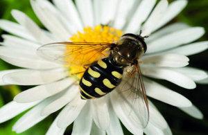 Wild Pollinator - Alan Drewitt