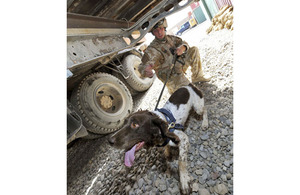 Lance Corporal Chris Emberson and his dog Pip search beneath a flatbed lorry in Lashkar Gah (stock image)
