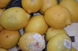 Lemons with rot