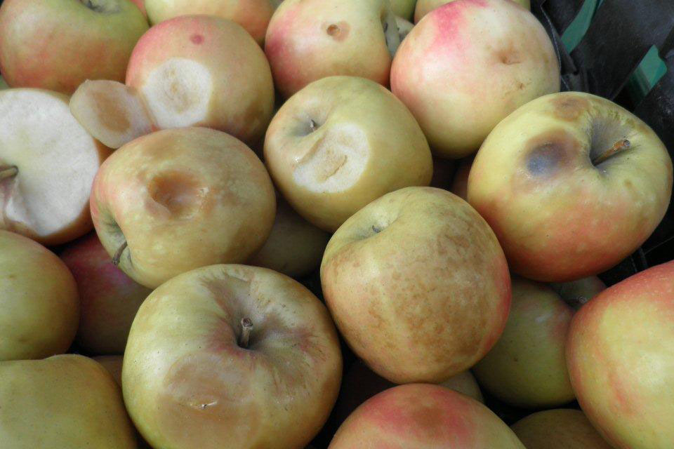 'Out of grade' South African apples variety Cripps Pink