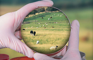 Image of petri dish and field