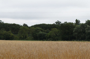 Field with trees and wheat