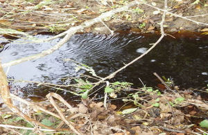 Slurry polluted water in River Yox