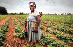 DFID supported farming intervention in Zimbabwe