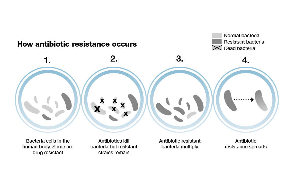 Infographic showing how antibiotic resistance occurs.