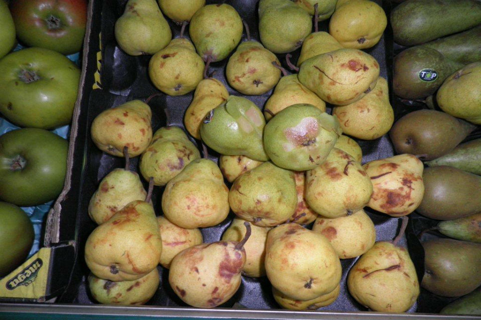 Pears which were on display and on offer for sale with skin defects.