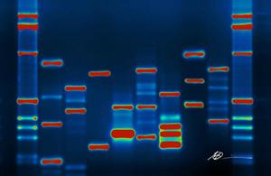 Image of DNA / (credit: Micah Baldwin/CC BY-SA 2.0)