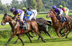 Racehorses