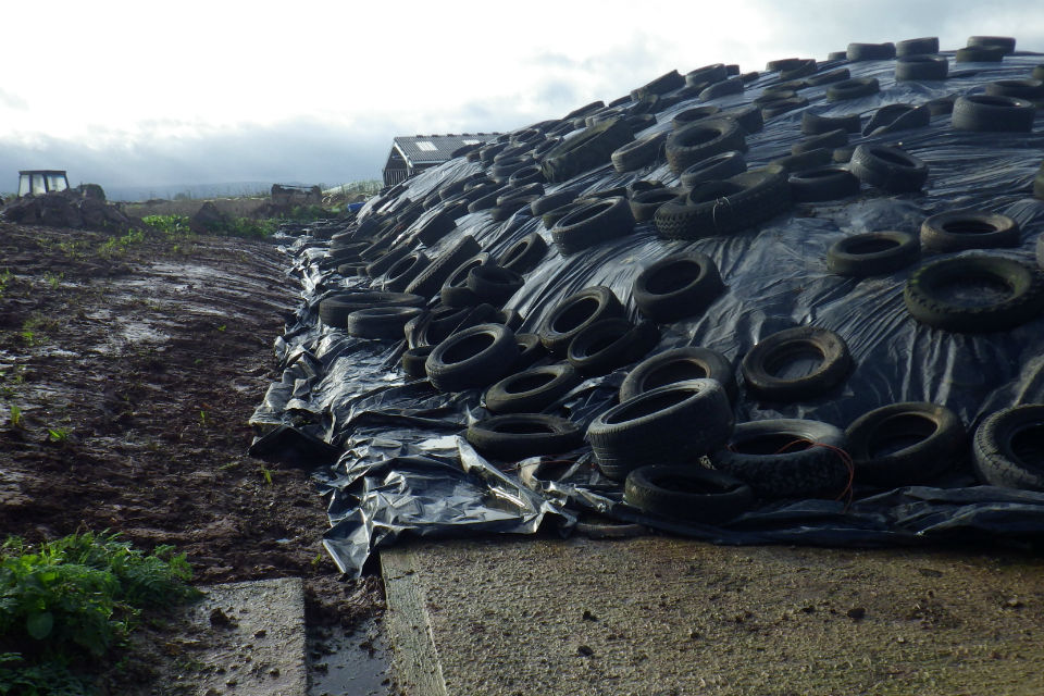 A silage clamp at Huntham Farm made from tarpaulin weighed down by heavy tyres