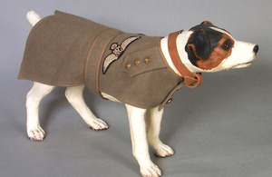A dog jacket as worn by a Yorkshire Terrier