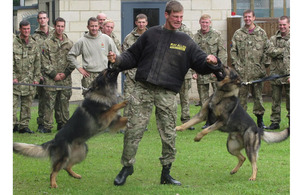 Police dogs attack a soldier