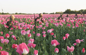 Troops patrol through a poppy field