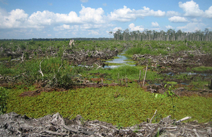 Image of Peatland